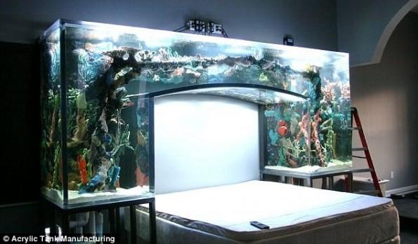 Fish Tank Bedroom Furniture : NFL Baller Chad Ochocinco Installs A Fish Tank Headboard In Bedroom