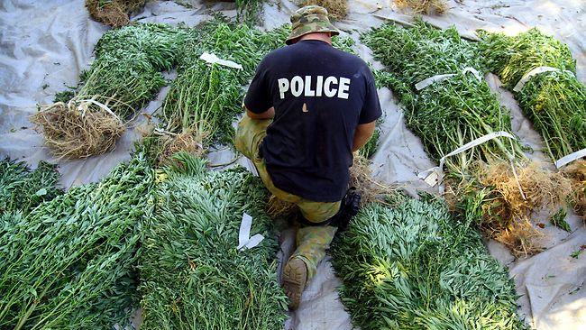 637001-police-drug-raid-cannabis