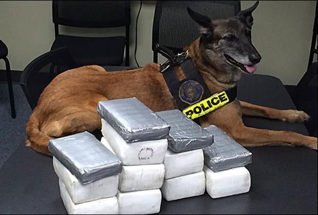 Barking-Bad-Nikko-Portland-Police1715125939