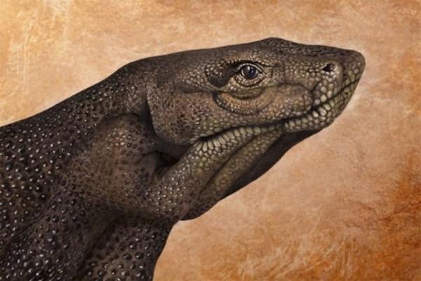 Komodo-Dragon-600x401