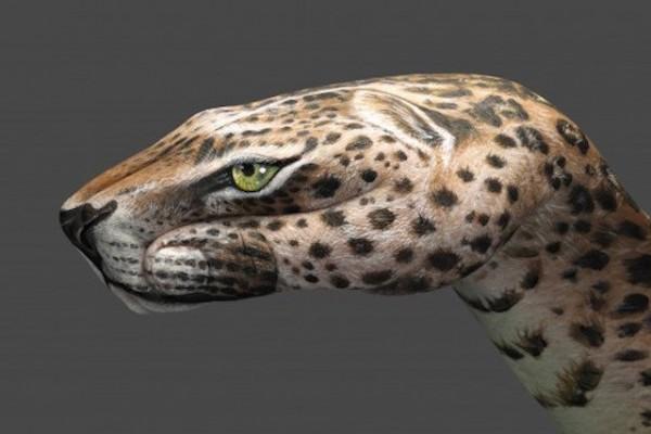 Leopard-600x400