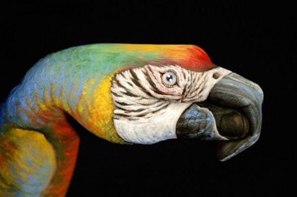 Parrot-600x399